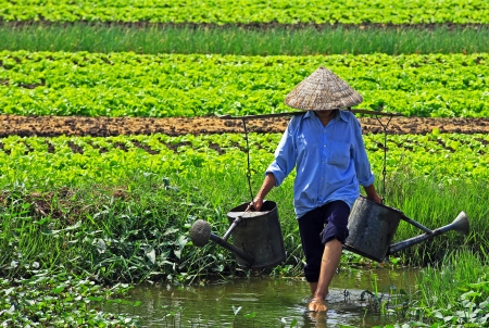 Watering the fields in Vietnam