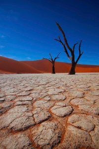 Dead Vlei Trees Low Profile