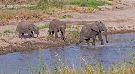 _E7A8377 Young elephant water-crossing web ready.jpg